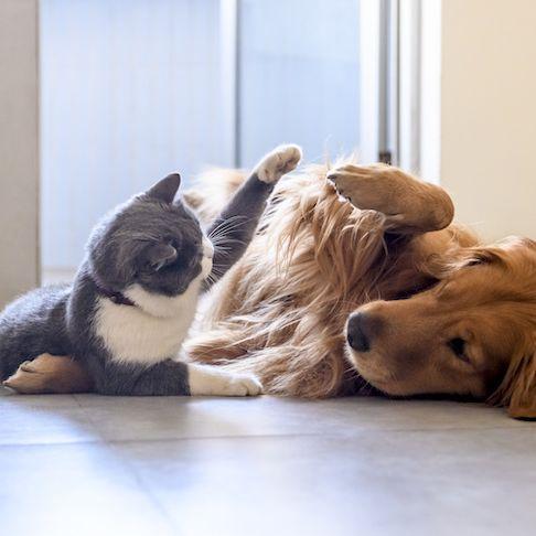 Pets flooring